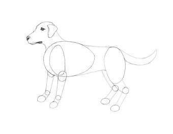 https://cf.ltkcdn.net/crafts/images/slide/180718-650x502-Draw-a-Dog-Slide-6-Joining-the-Legs-sm.jpg