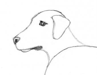 https://cf.ltkcdn.net/crafts/images/slide/180720-650x502-Draw-a-Dog-Slide-4-More-Head-Details-sm.jpg