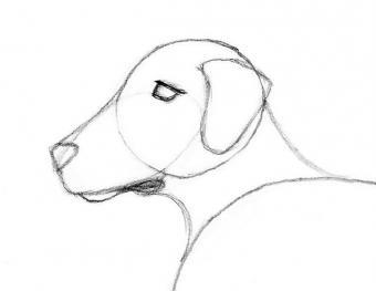https://cf.ltkcdn.net/crafts/images/slide/180721-650x502-Draw-a-Dog-Slide-3-Head-Details-sm.jpg