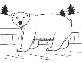 Finished drawing of a polar bear