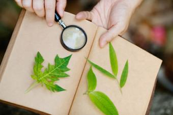 Leaf Collection Book