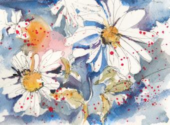 Summer wildflower Daisys