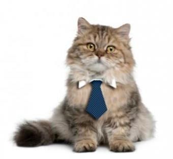 Cat Necktie Pattern