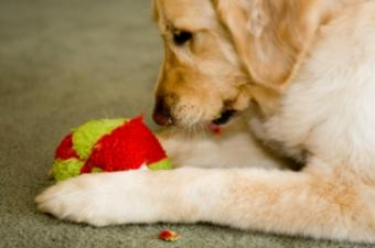 Knitting Dog Toys