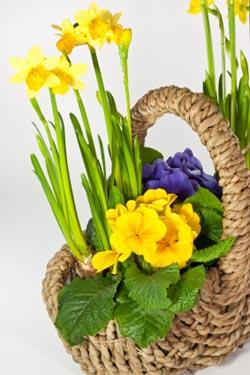 May Day Basket Ideas