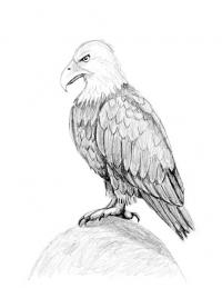 Finished drawing of an eagle