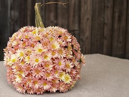 Chrysanthemum covered pumpkin centerpiece