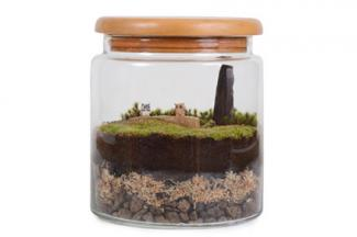Terrarium for dad