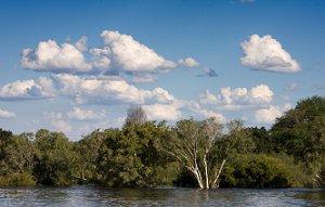 Africariver1.jpg