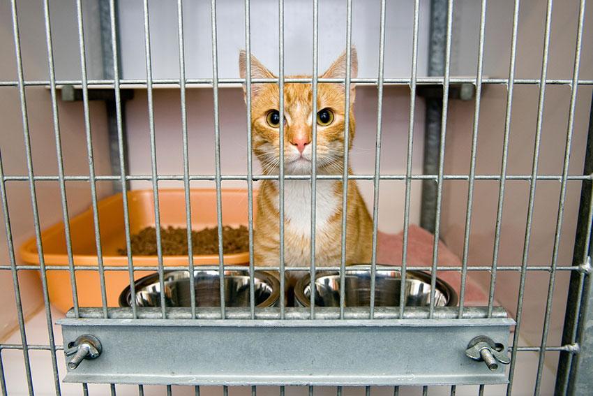 https://cf.ltkcdn.net/dating/images/slide/191798-850x567-cat-at-animal-shelter.jpg