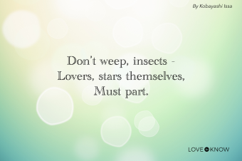 Don't Weep, Insects Poem