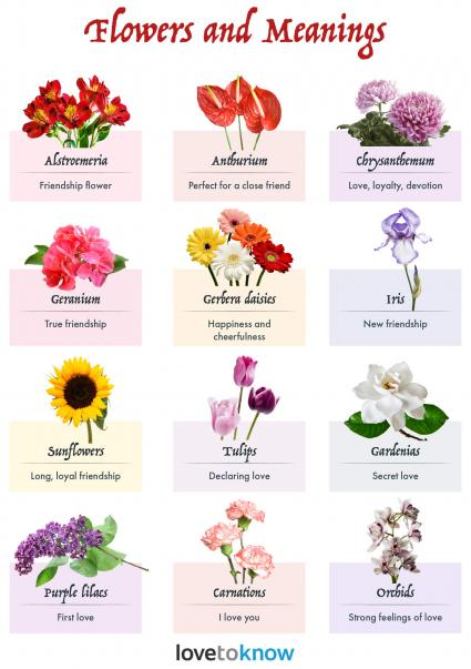 Flowers and meanings