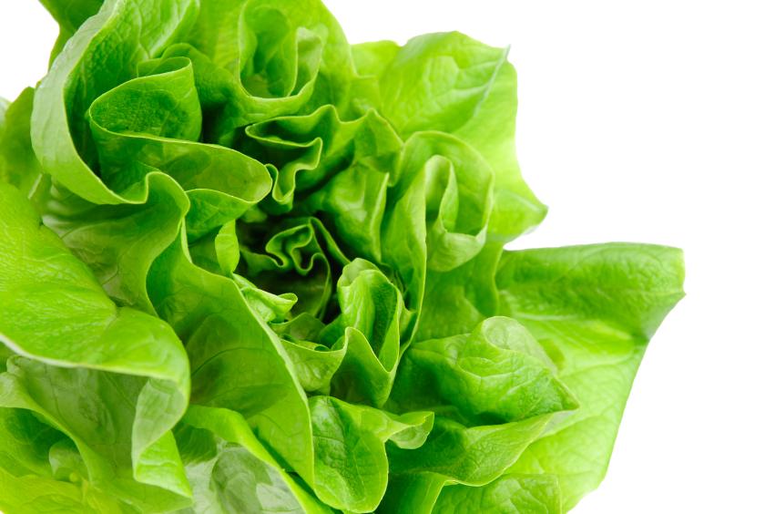 1-lettuce.jpg