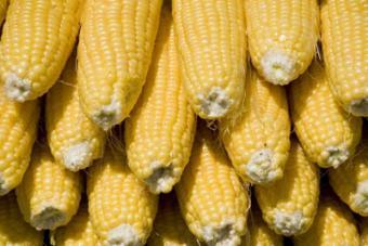 No Corn Diet