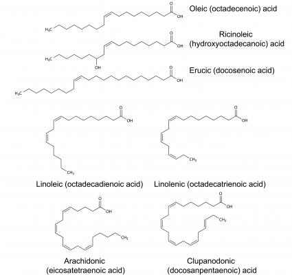 Structural chemical formulas of unsaturated fatty acids