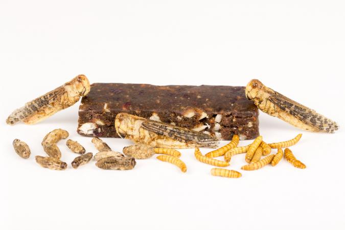 Fried crickets molitors locusts insects, energy bar