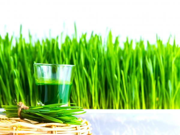 Shot glass of wheat grass