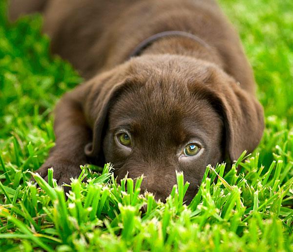 puppy600.jpg