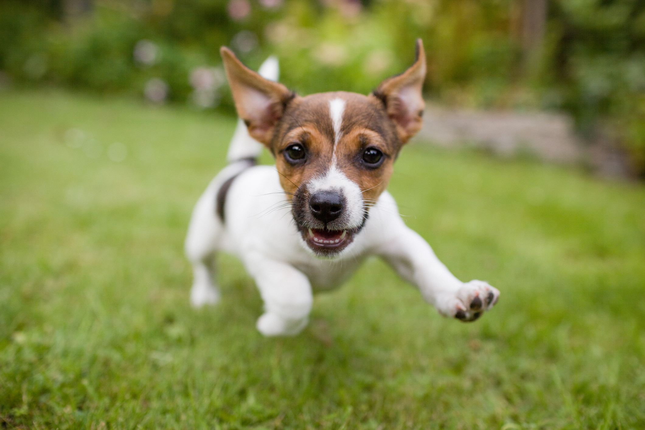 How to Tell When a Puppy Is Full Grown | LoveToKnow