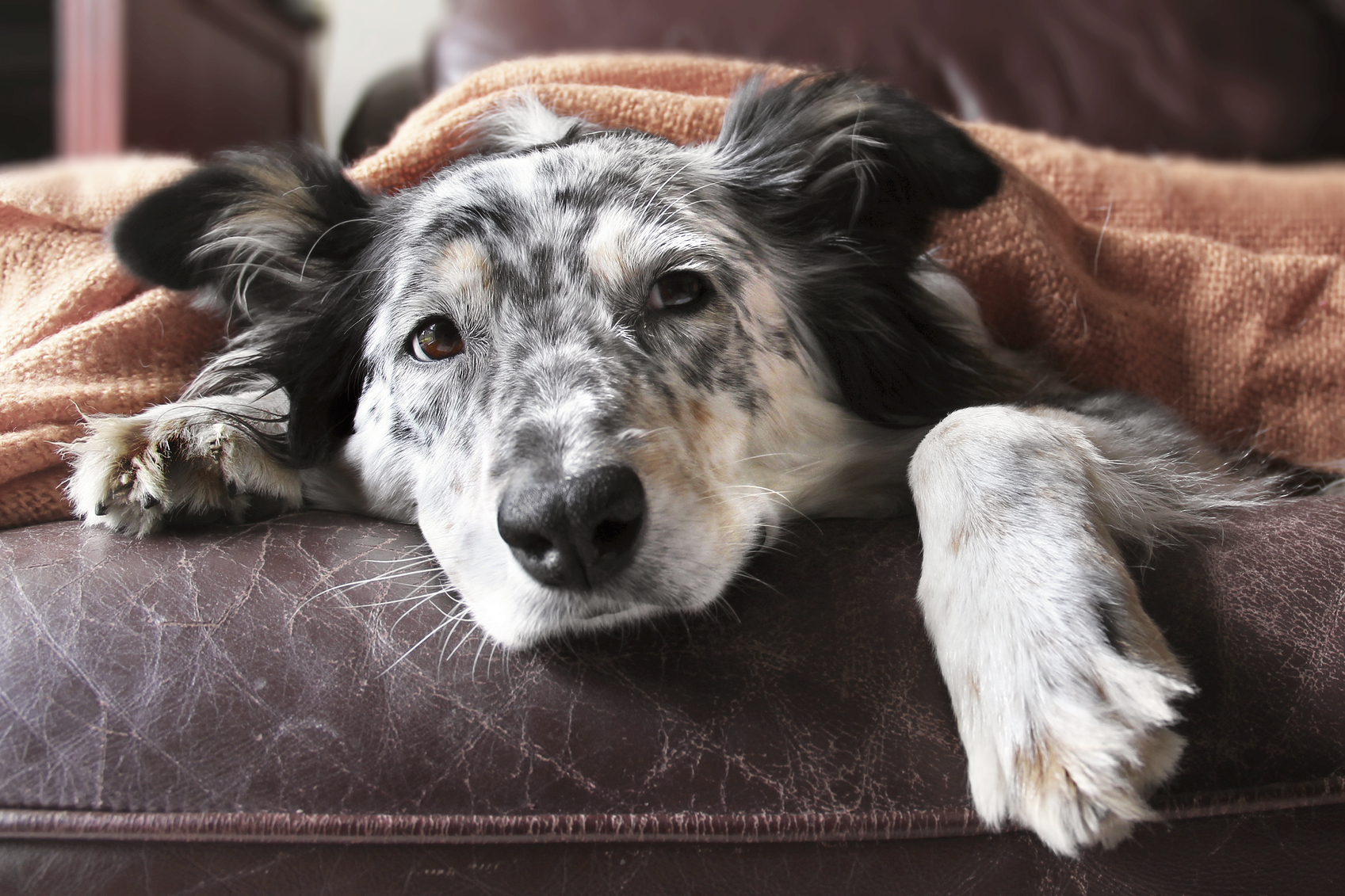 What Are The Symptoms Of A Dog Dying From Kidney Failure Lovetoknow
