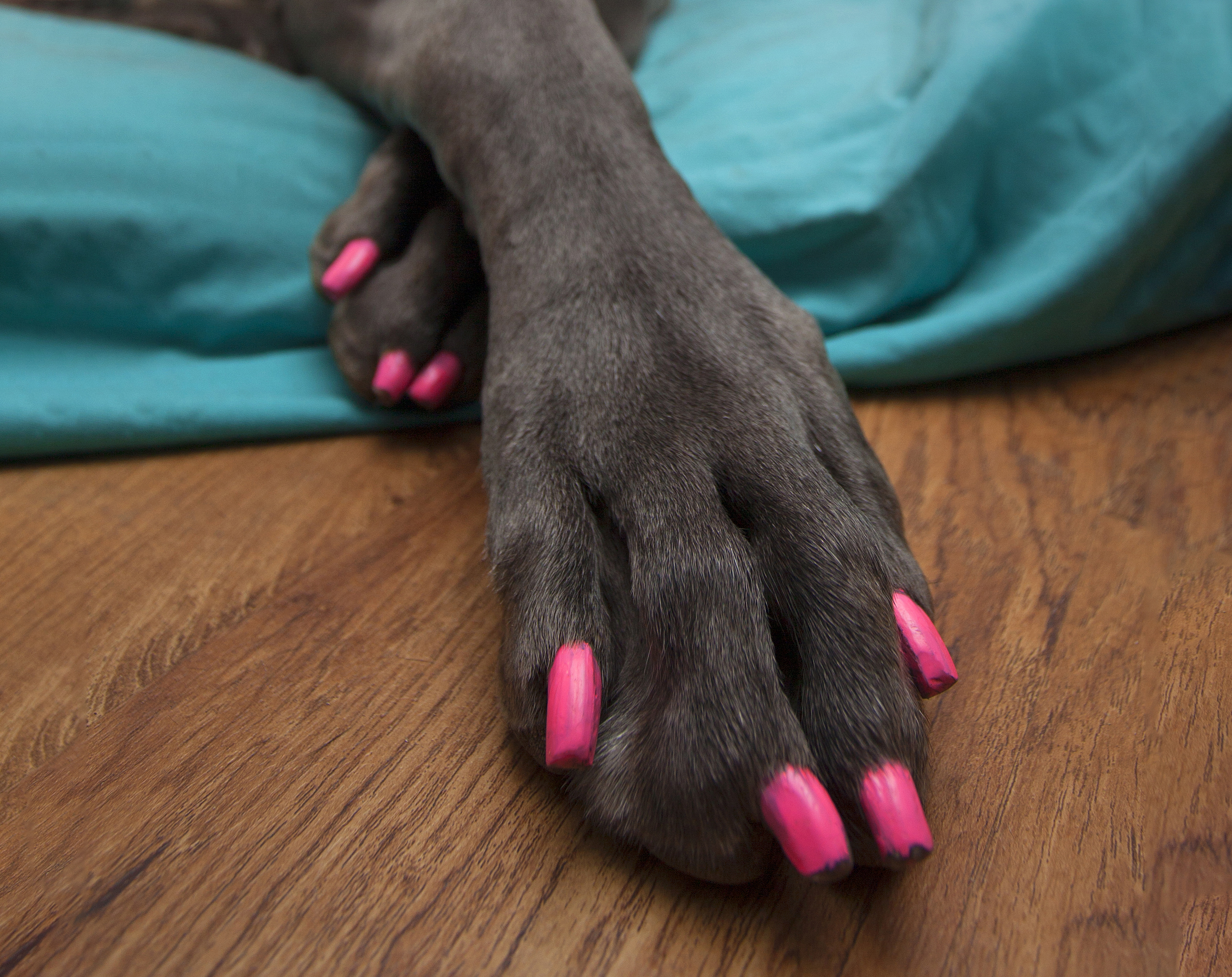 Guide to Dog Nail Polish Options