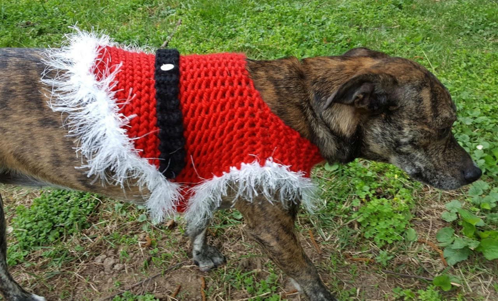 Free Knitted Christmas Dog Sweaters Patterns