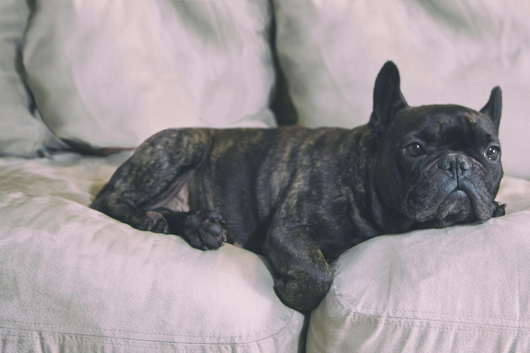 Symptoms Of Dog Poisoning Lovetoknow