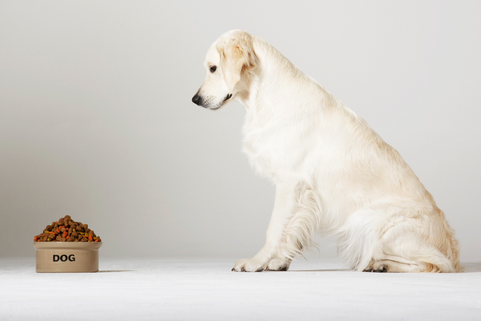 Diabetic Dog Food Benefits and