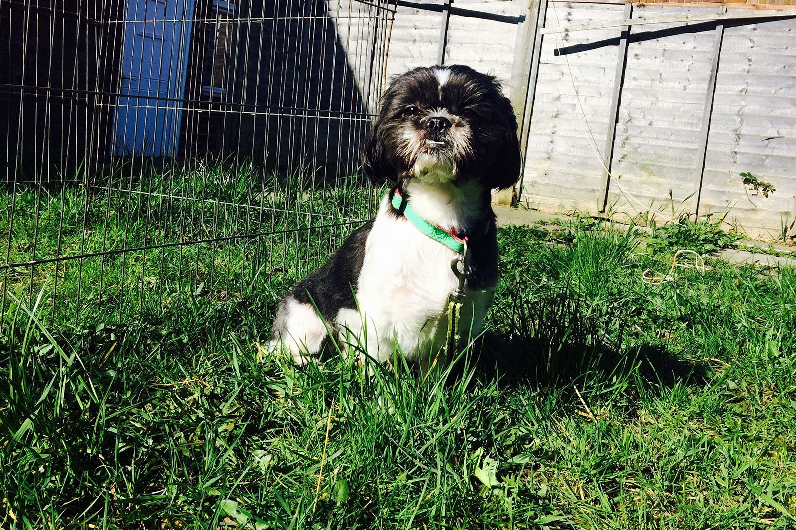 5 Types Of Flooring For An Outdoor Dog Run Lovetoknow