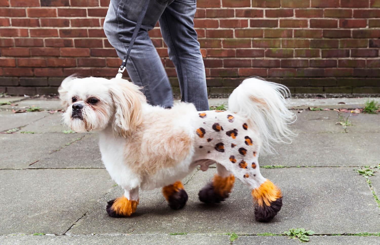 Five Unusual Dog Grooming Styles