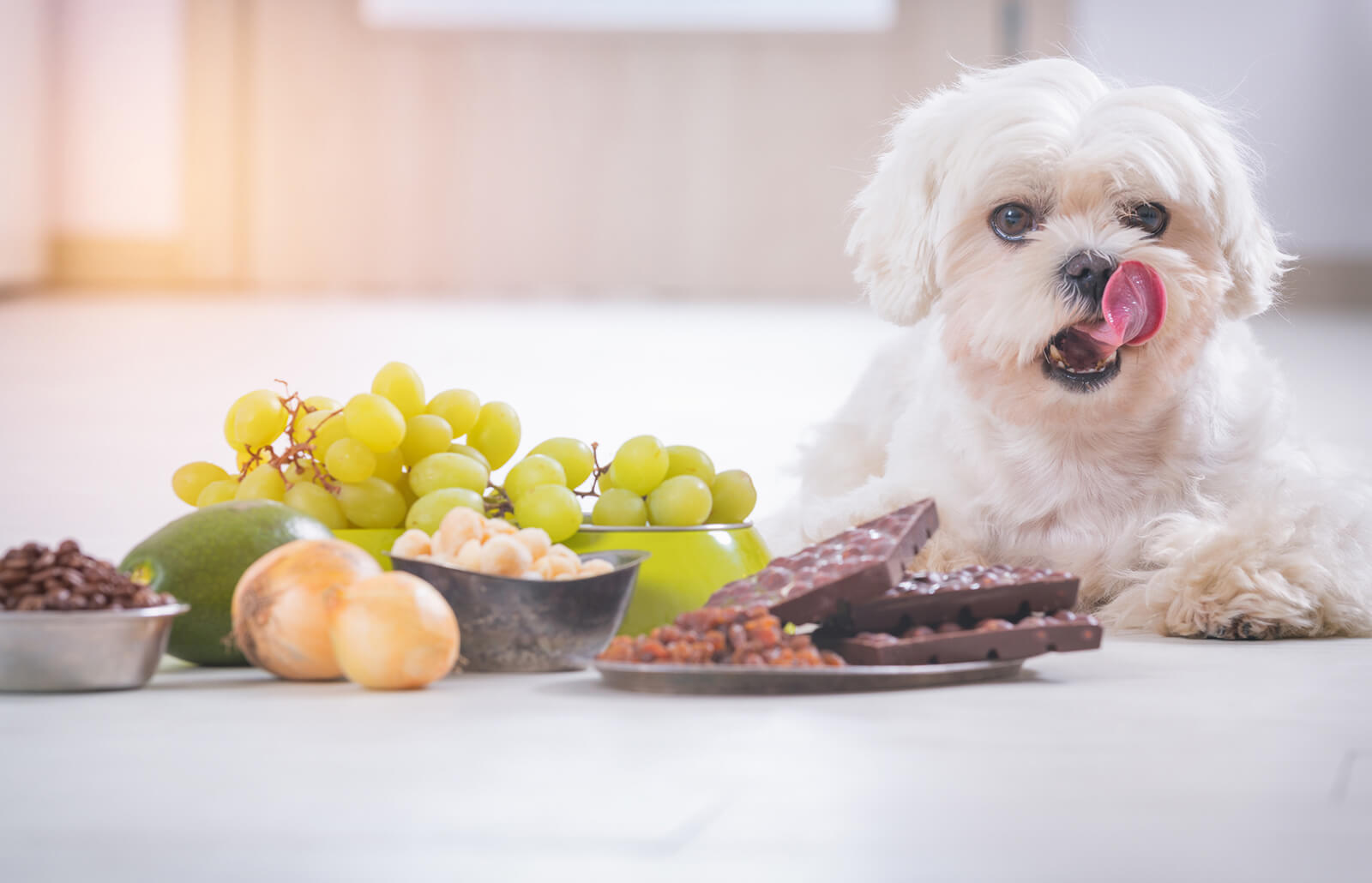 Halloween 2020 Does The Dog Die Can a Dog Die From Eating Chocolate | LoveToKnow