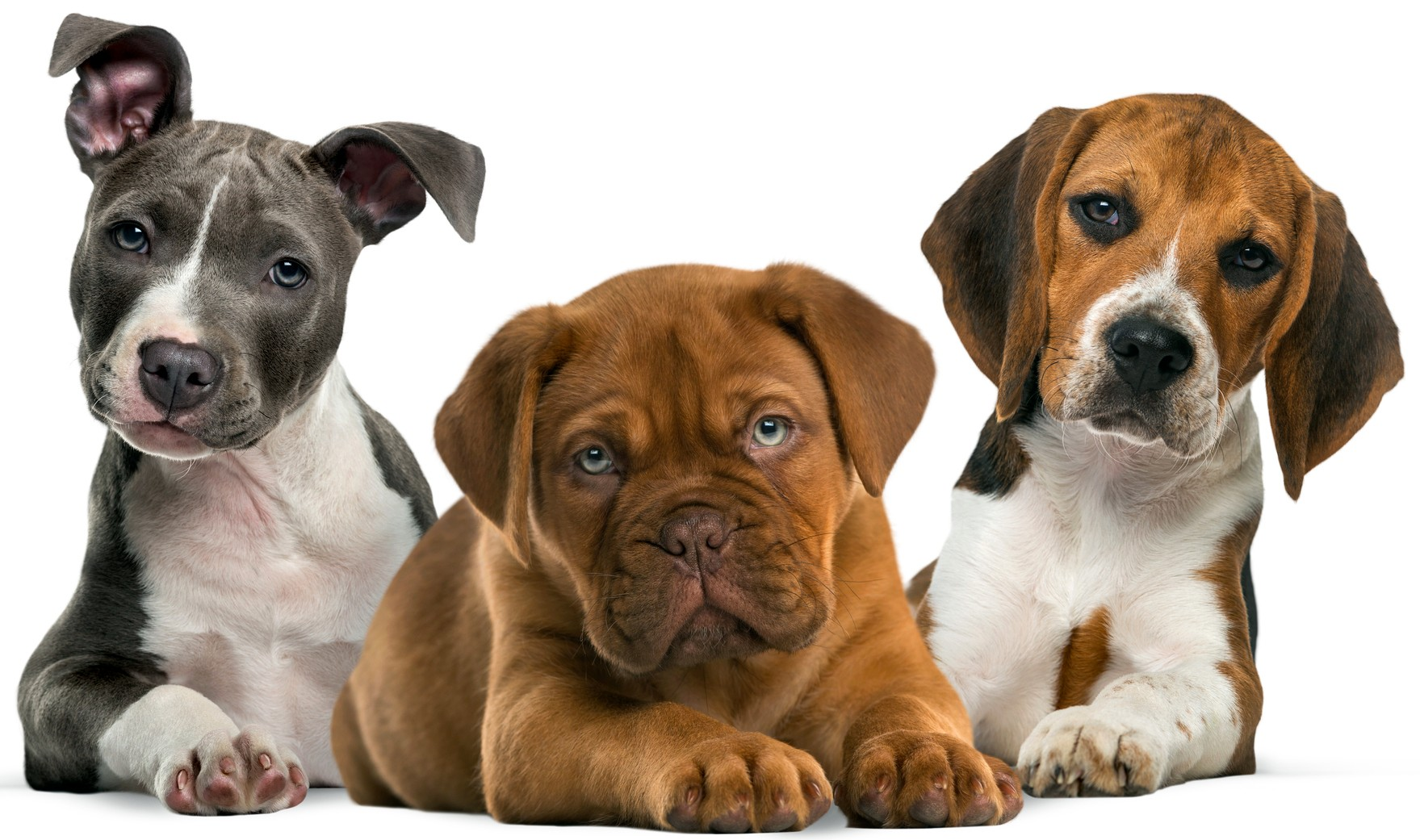 200 Great Dog Names Lovetoknow