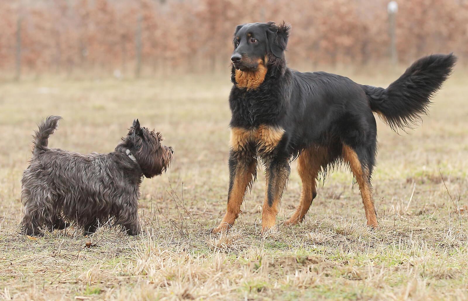 Understanding Your Dog's Body Language Signals | LoveToKnow
