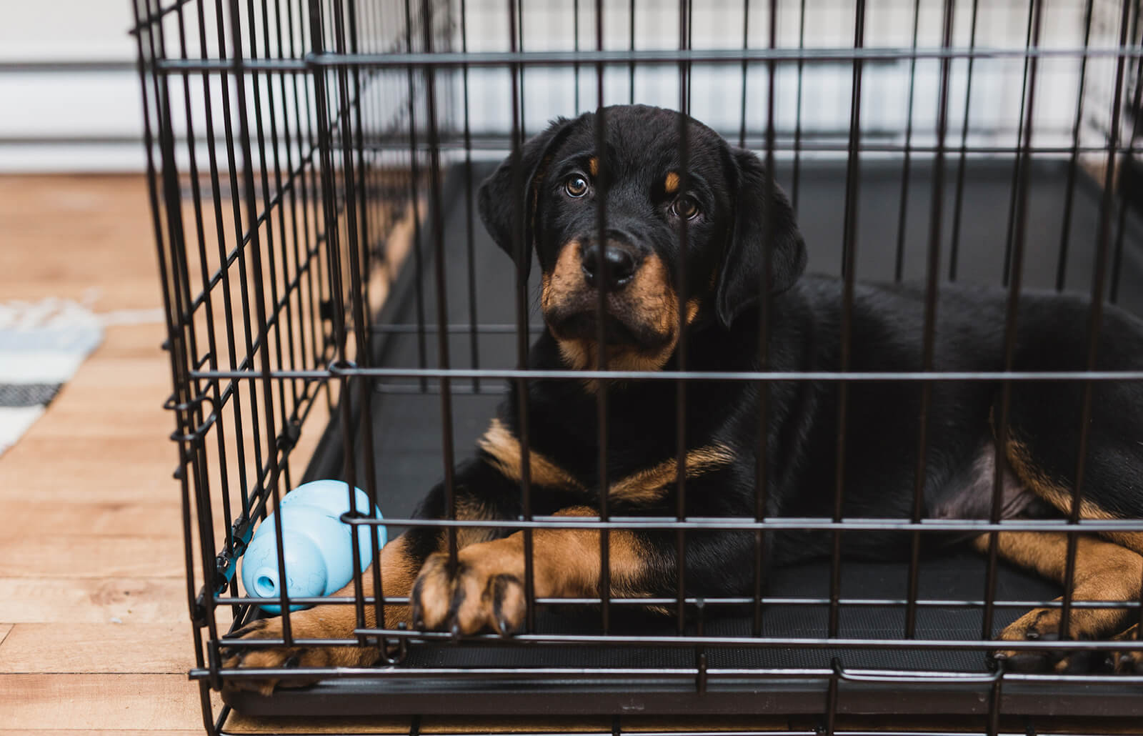 How to Crate Train Your Dog | LoveToKnow