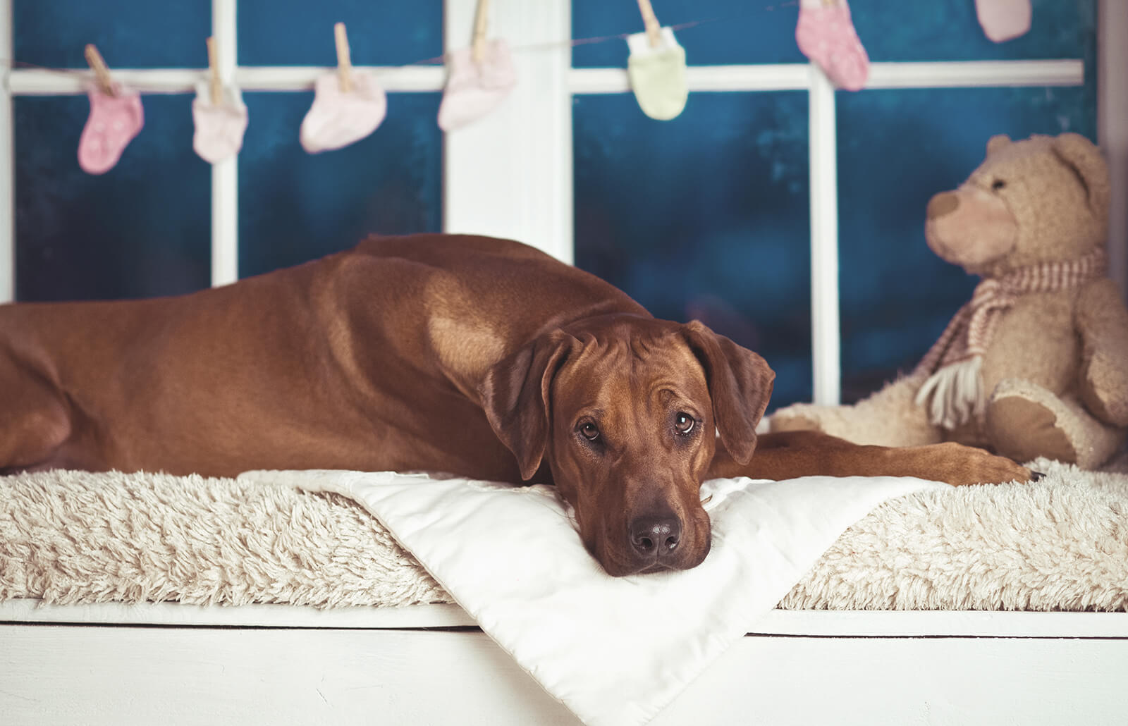The Average Length of a Dog's Pregnancy | LoveToKnow