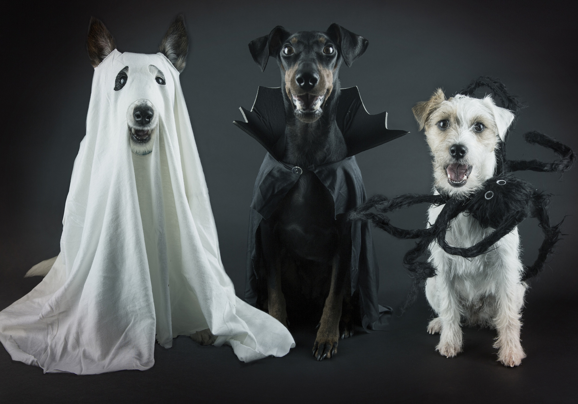Funny Halloween Dog Pictures Lovetoknow