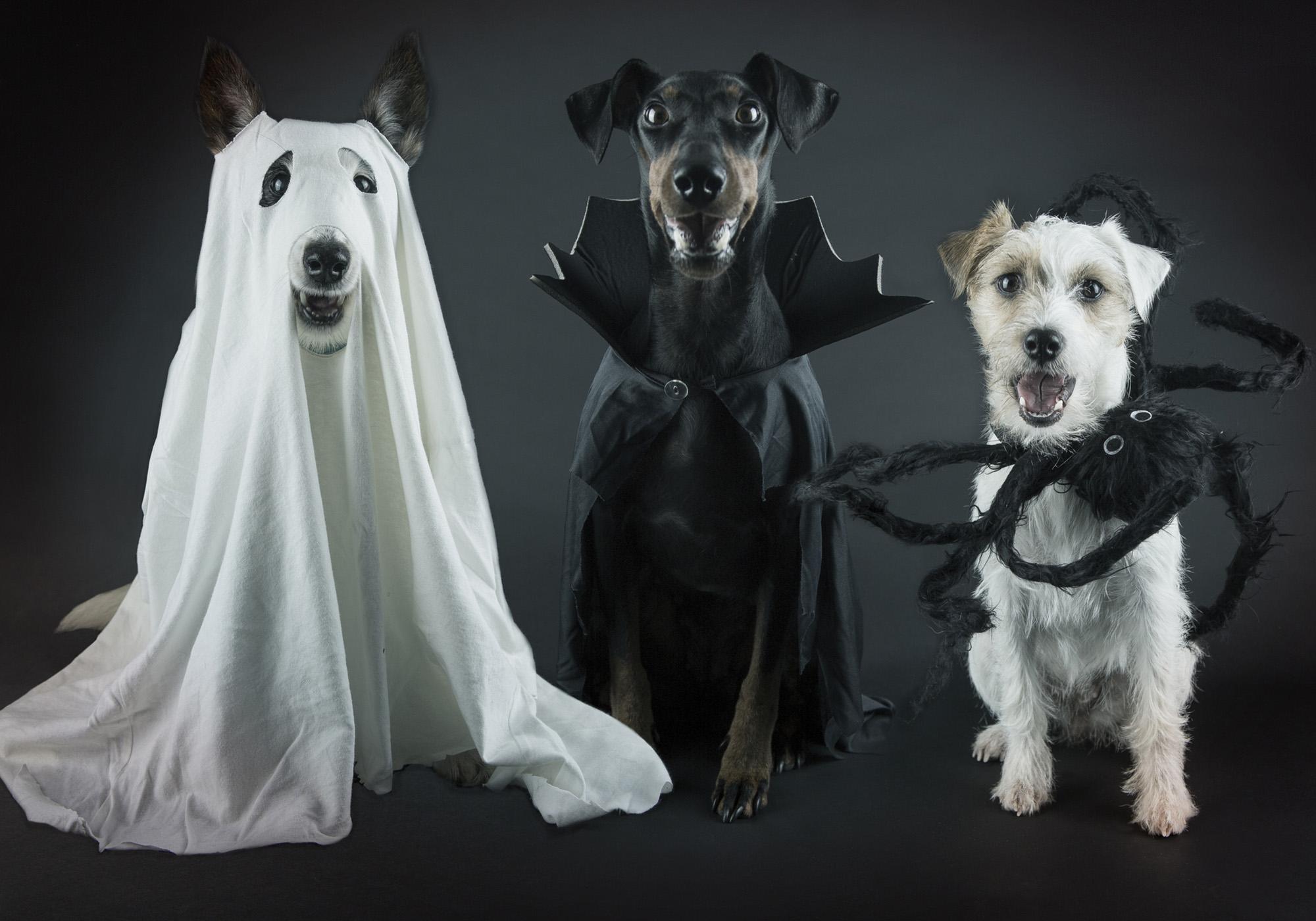 1_Halloween_dogs.jpg