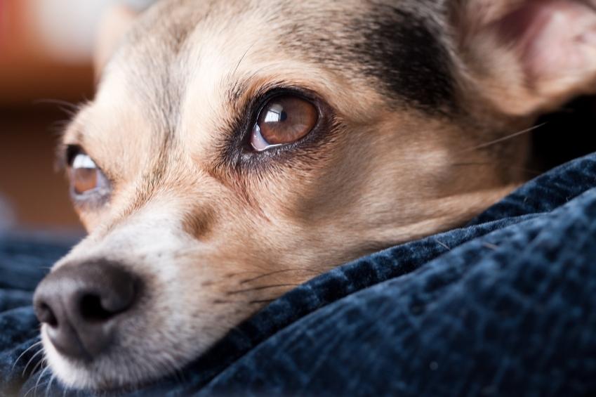 puppy_eyes.JPG