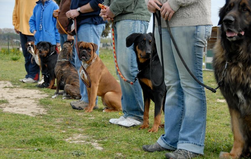 several_dogs.JPG