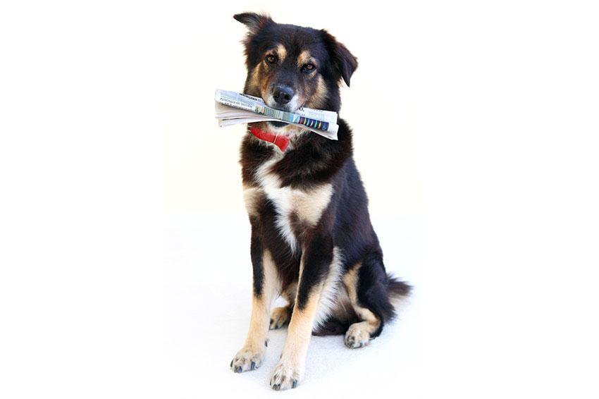 https://cf.ltkcdn.net/dogs/images/slide/187969-850x566-dog-fetching-newspaper.jpg