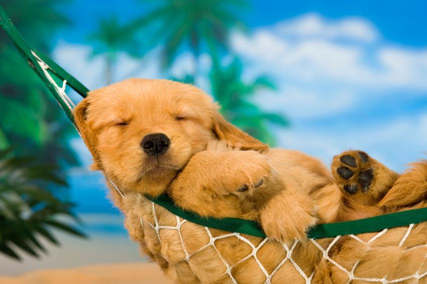 https://cf.ltkcdn.net/dogs/images/slide/187972-850x566-puppy-in-hammock.jpg