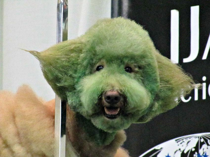https://cf.ltkcdn.net/dogs/images/slide/190021-850x638-Green-Faced-Dog.jpg