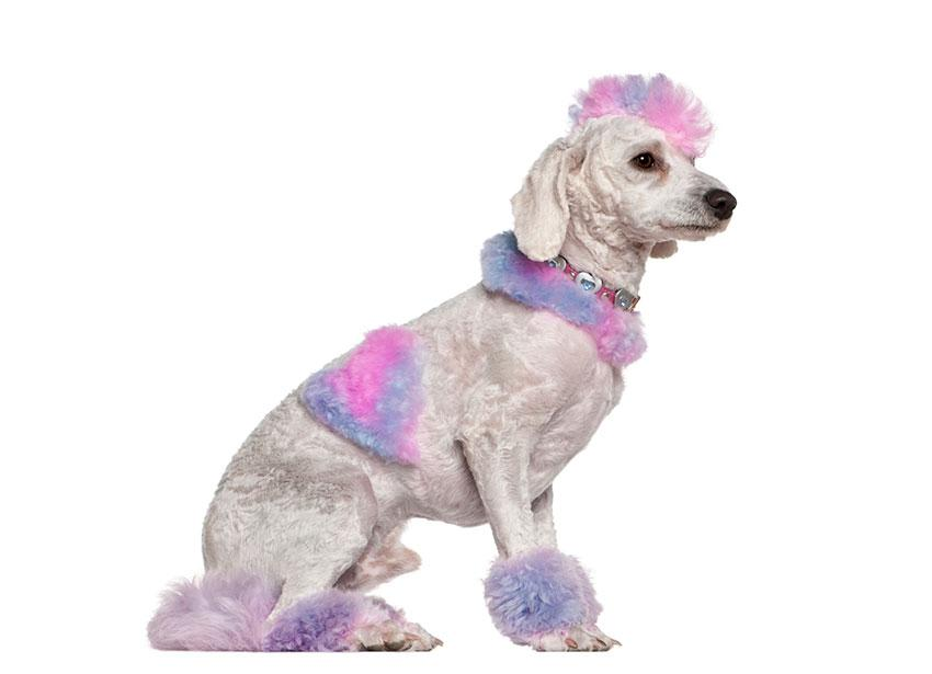 https://cf.ltkcdn.net/dogs/images/slide/190029-850x615-pink-and-lavender-dog.jpg