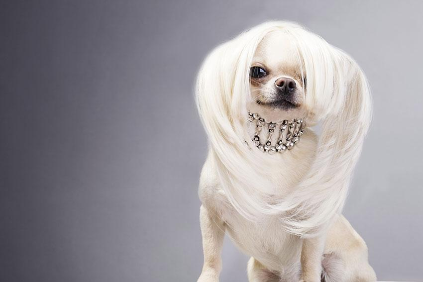 https://cf.ltkcdn.net/dogs/images/slide/190032-850x567-dog-with-long-hair.jpg