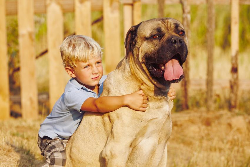 https://cf.ltkcdn.net/dogs/images/slide/208208-850x567-Little-boy-with-large-dog.jpg