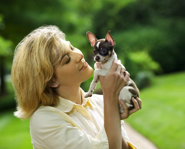 https://cf.ltkcdn.net/dogs/images/slide/208278-618x500-chihuahua.jpg