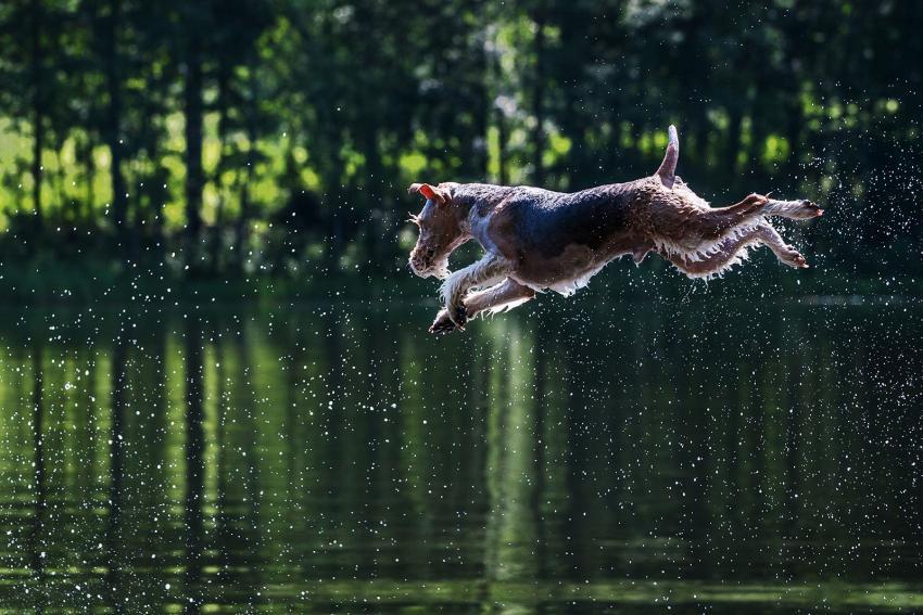 https://cf.ltkcdn.net/dogs/images/slide/208943-850x567-Jumping-dog.jpg