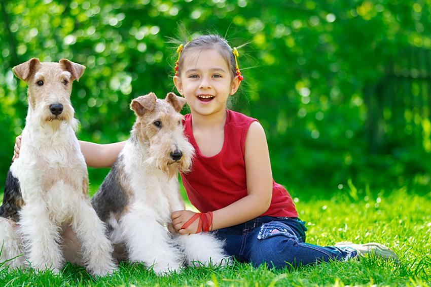 https://cf.ltkcdn.net/dogs/images/slide/208952-850x567-Girl-and-two-fox-terriers.jpg