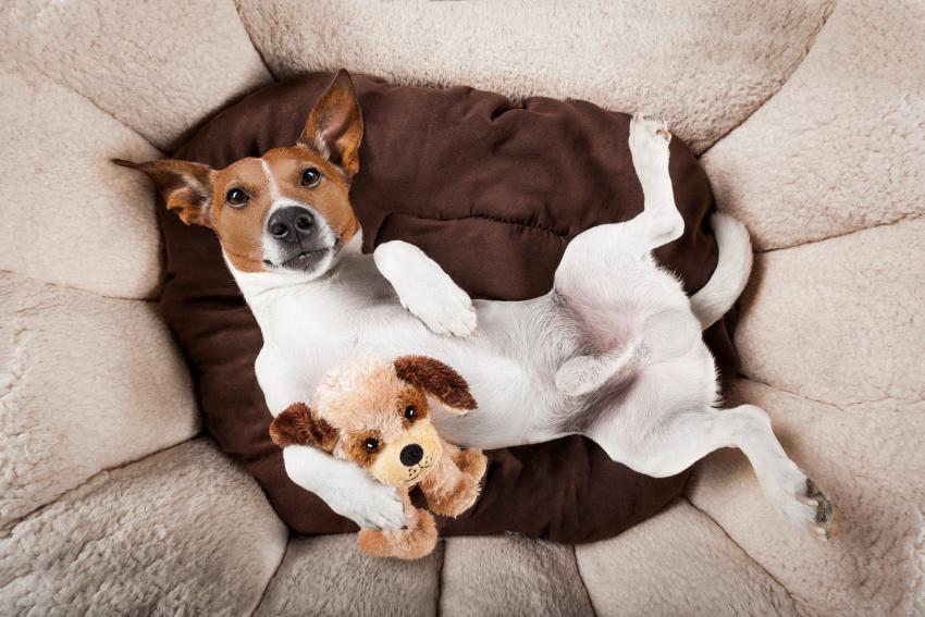 https://cf.ltkcdn.net/dogs/images/slide/234630-850x567-terrier.jpg