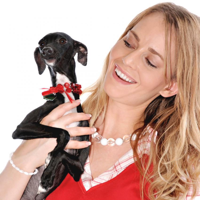 https://cf.ltkcdn.net/dogs/images/slide/244107-850x850-2-miniature-greyhound.jpg
